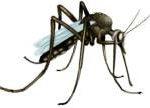 mugbeestje